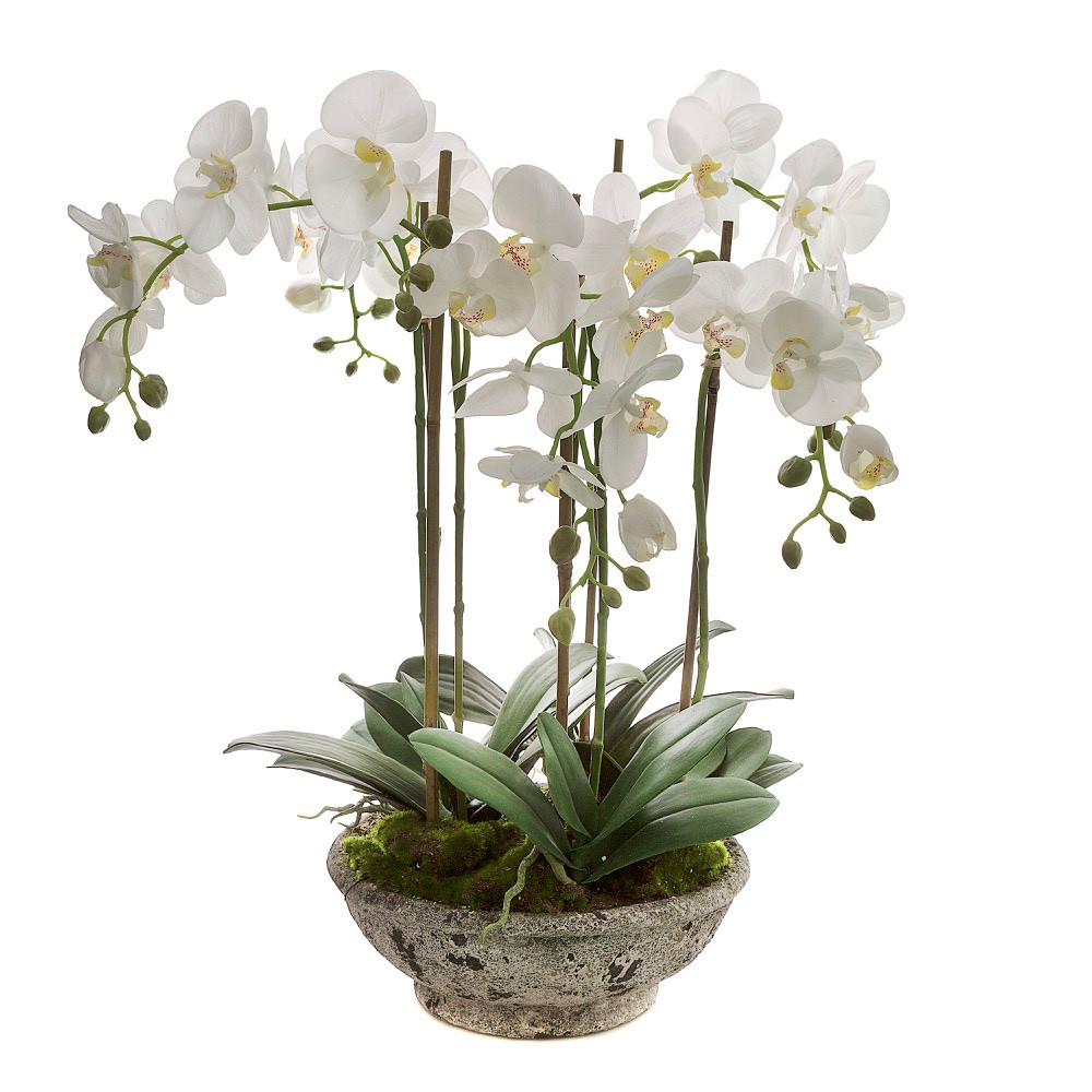 NEW Orchid In Pot | eBay