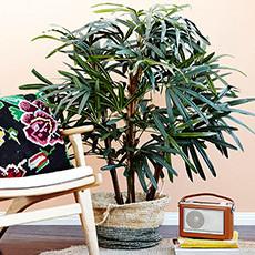 Plant Pots & Stands