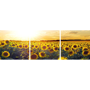 Sunflowers at Sunset Triptych (Set of 3)