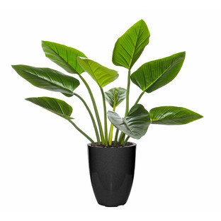 Green Kingdom Plant Glazelite Pot