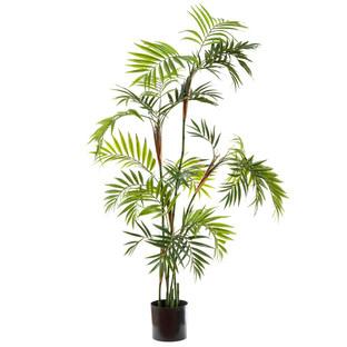 Parlour Palm Tree
