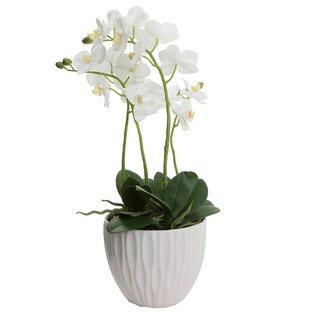 60cm White Faux Orchid with Pot