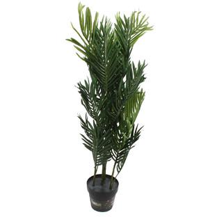 Potted Mini Palm