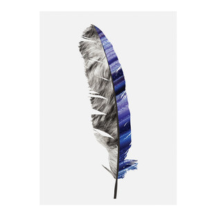 Feather #2 Modern Printed Wall Art
