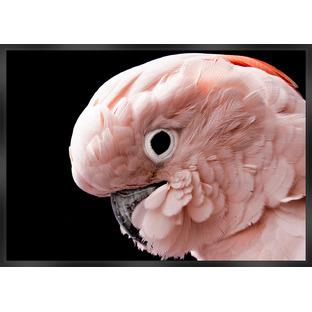 Pink Cockatoo Framed Canvas Wall Art