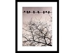 Innovate Interiors Swallows Song II Framed Print