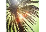 Euro Living Sun Palm Wall Print