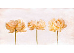 Marmont HIll Peonies Canvas Wall Art