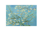 Art Illusions Van Gogh - Blossoming Almond