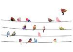 Little Sticker Boy Birds & Blossoms Wall Decal