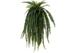 The Home Collective Potted Faux Boston Fern
