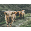 The Herd Canvas Wall Art