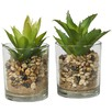 2 Piece Medium Faux Succulent Plant Set