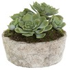 Green Faux Succulent with Ceramic Pot