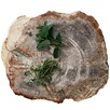 Petrified Wooden Fossil Plate