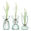 3 Piece Canopy Trio Glass Bulb Vase Planter Set
