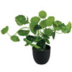 24cm Faux Money Bag Plant