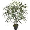 90cm Potted Faux Dizygotheca Elegantissima Plant