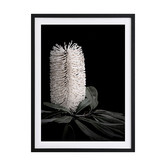 Alcove Studio White Banksia I Framed Printed Wall Art
