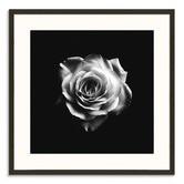 Photographers Lane Romantic Rose Printed Wall Art