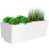 Glowpear Mini Self Watering Wall Planter