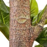Maddison Lane 190cm Potted Faux Fiddle Leaf Plant