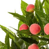 Maddison Lane 95cm Potted Faux Peach Tree