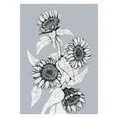 Frianki Gunmetal Sunflower Bunch Unframed Paper Print