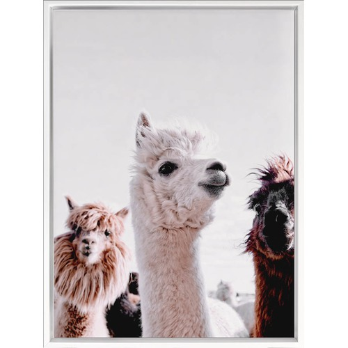 A La Mode Studio Llamas On Parade Canvas Wall Art