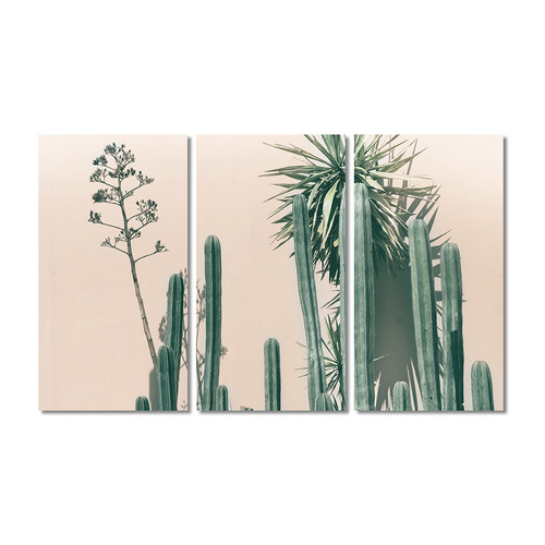 A La Mode Studio Blush Cacti Stretched Canvas Wall Art Triptych