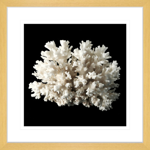 Innovate Interiors Coral Reef I Framed Print