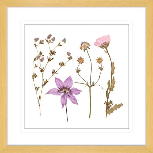 Innovate Interiors Spring WIldflowers IV Framed Print