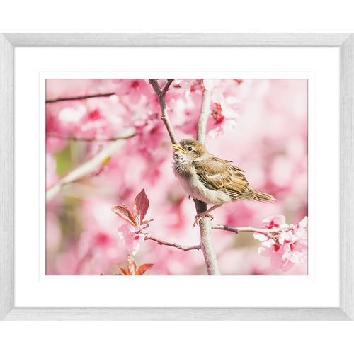 Innovate Interiors Swallows Song IV Framed Print
