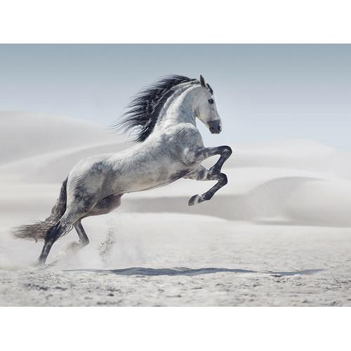 Running Leap Canvas Print