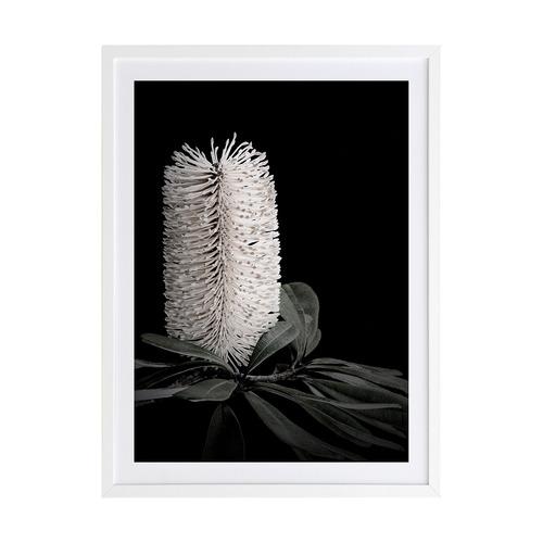 White Banksia I Framed Printed Wall Art