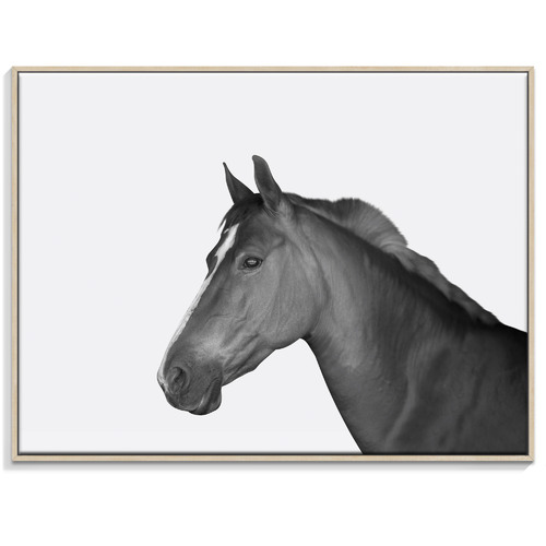Our Artists' Collection Horse Printed Wall Art