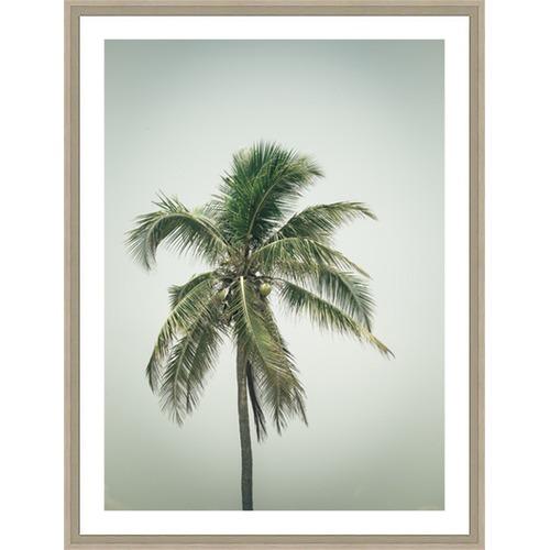 Coconut Palm Tree Iv Framed Print Temple Amp Webster