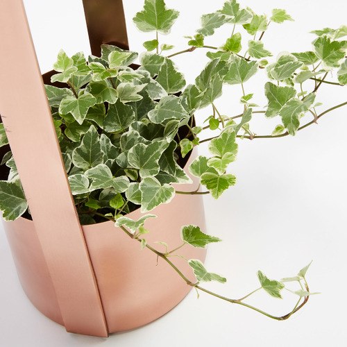 Linea Furniture Rose Gold Alfonso Metal Planter with Handle