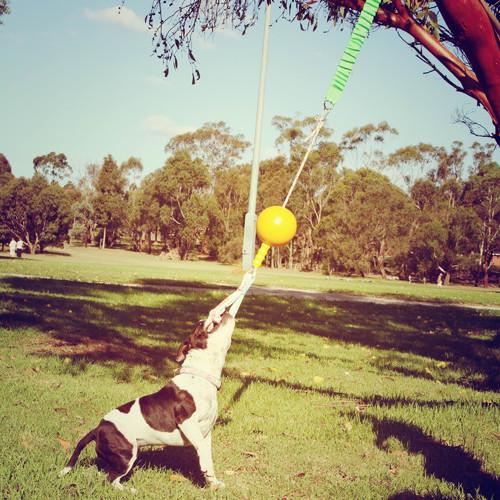 Aussie Dog Home Alone Dog Toy