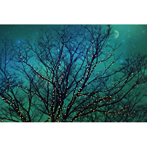 Marmont HIll Magical Night Art Print on Canvas