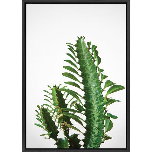 Art Illusions Euphorbia Succulent Canvas