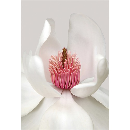 Art Illusions Magnolia Canvas Wall Art by Brian Haslam