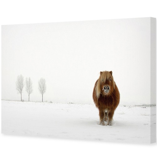 Art Illusions The Cold Pony Canvas Wall Art by Gert Van Den