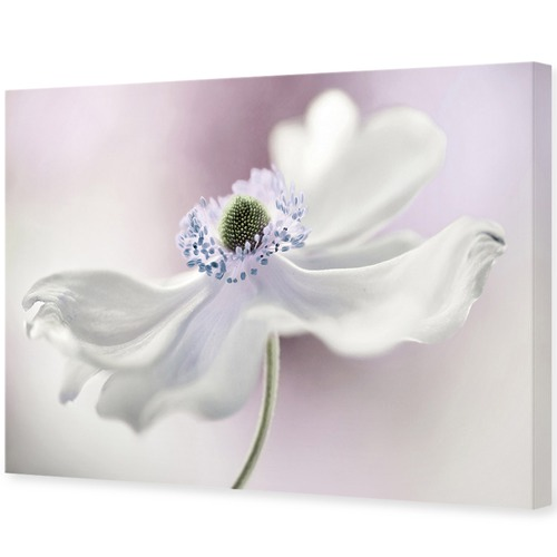 Art Illusions Aneonome Breeze Canvas Wall Art by Mandy Disher