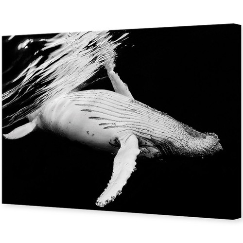 Art Illusions Black & Whale Canvas Wall Art by Gabriel Barathieu