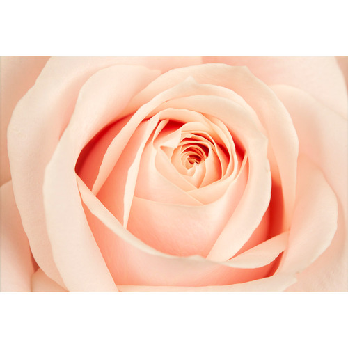 Art Illusions The Perfect Rose Canvas Wall Art