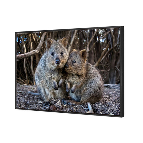 Art Illusions Perth Rottnest Island Quokka II Canvas Wall Art