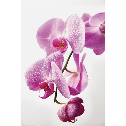 Art Illusions Orchid Print