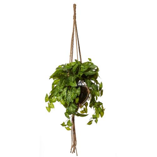 The Home Collective 60cm Pothos Como Hanging Pot