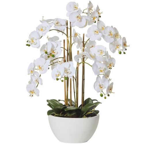 The Home Collective 70cm Faux Butterfly Orchid & Round Pot